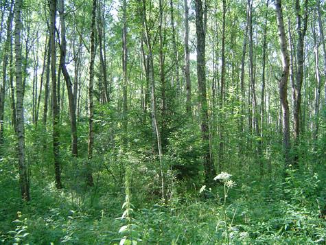 Почему березняк и смешанный лес называют временными биогеоценозами